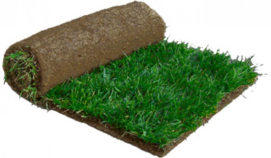 Sod/Grass